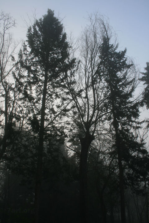 Morning… Grey I