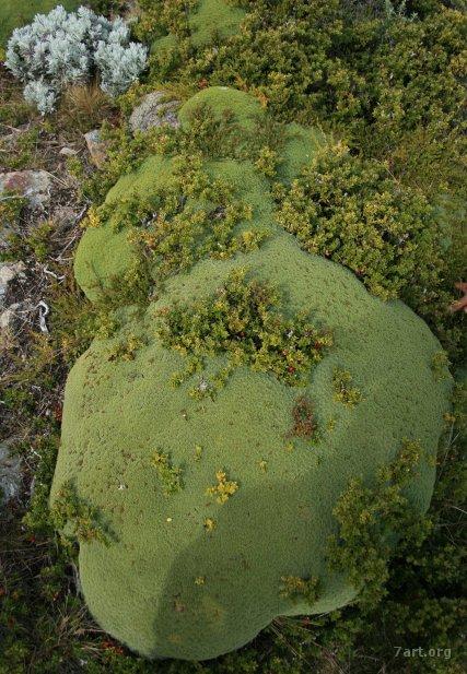 Ushuaia – Turba