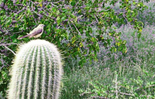 Cactus como soporte